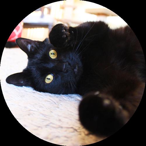 My cat, Mucha!